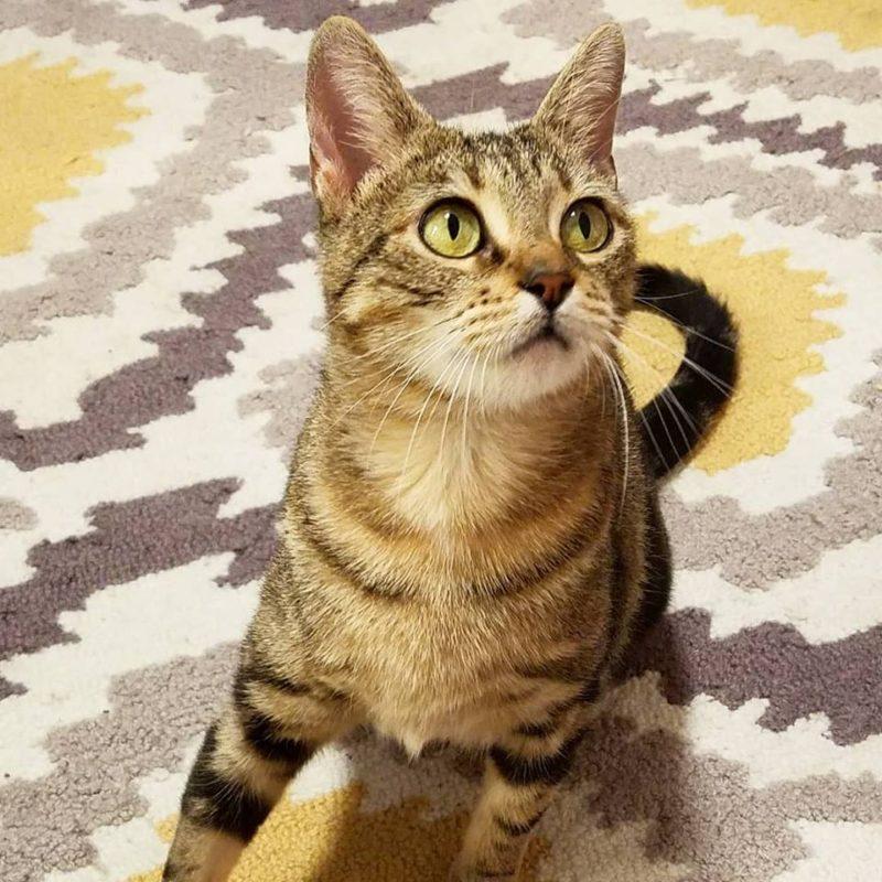 Trinity the Cat